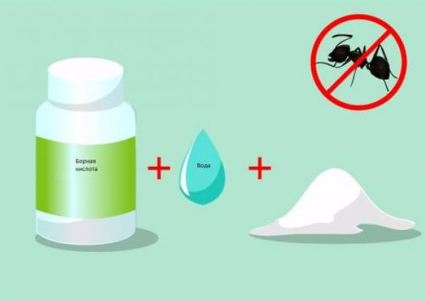 Борная кислота от муравьев, как приготовить приманку