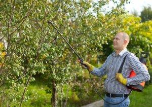 Опрыскивание яблонь