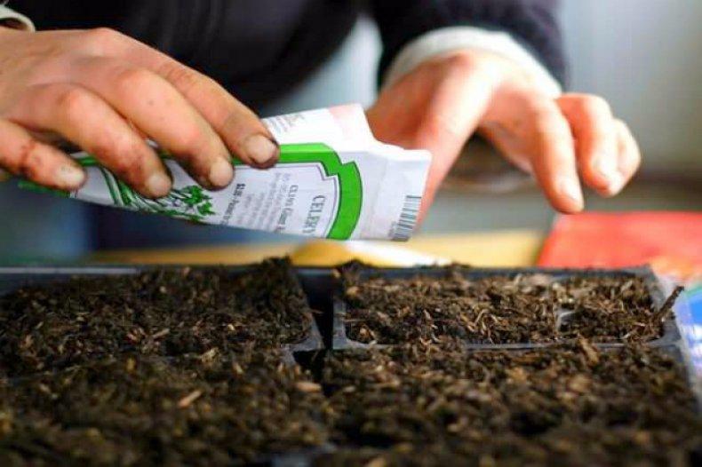 сертифицировать, семя, март, земельных ассоциаций
