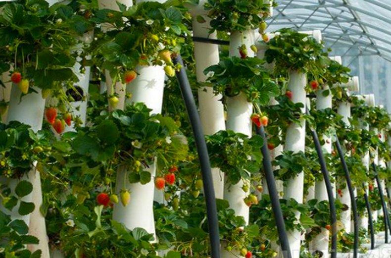 Вертикальные грядки для клубники из пластиковых труб