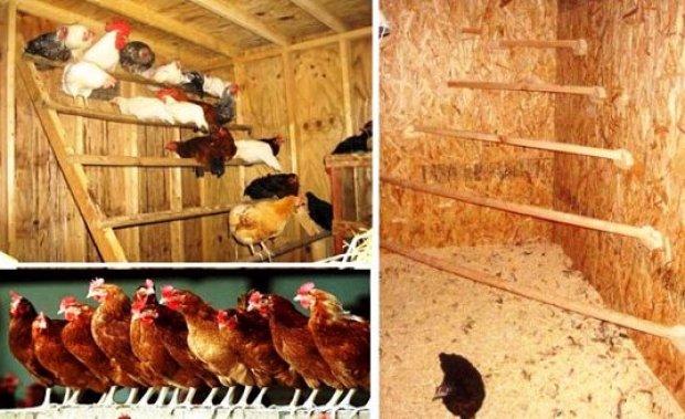 Как сделать своими руками насест для куриц