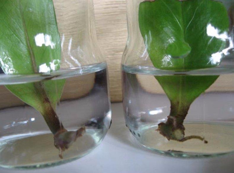 Размножение в воде