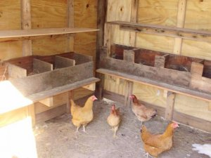 Гнездо для кур несушек