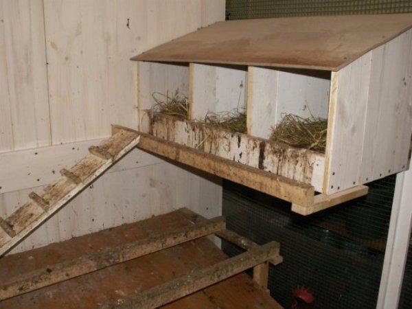 Гнездо для несушек с яйцесбоником своими руками 19