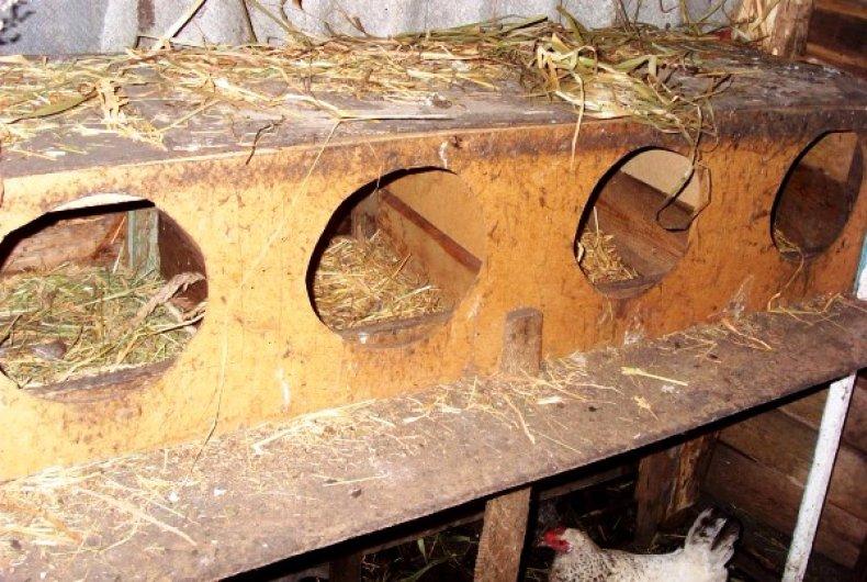 Гнездо в виде будки