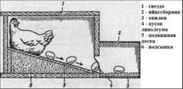 Гнездо для несушек с яйцесбоником своими руками 27