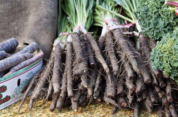 Выращивание скорцонеры 5
