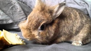 Картофель в рационе заболевшего кролика