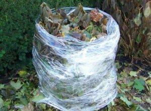 Зимнее укрытие для гортензии из пленки и листьев