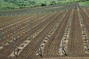 Важно, чтобы почва была достаточно плодородной
