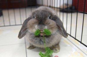 Диета для кроликов