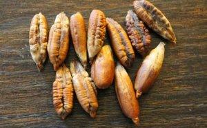 Косточки финиковой пальмы