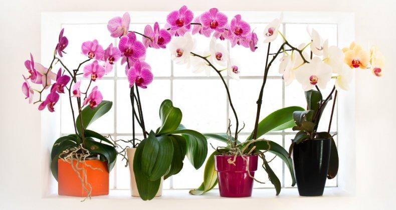 Разные горшки для орхидей