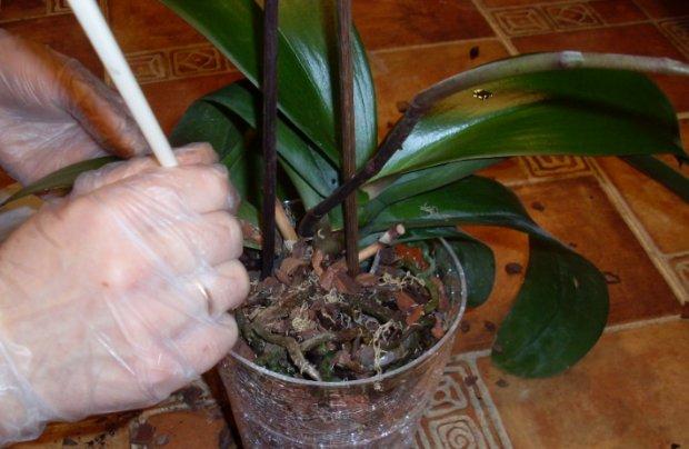 Що робити з орхідеєю коли вона відцвіла