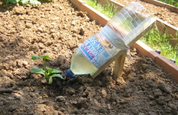 Агроном: Как организовать полив из бутылок в теплице в 2019 году
