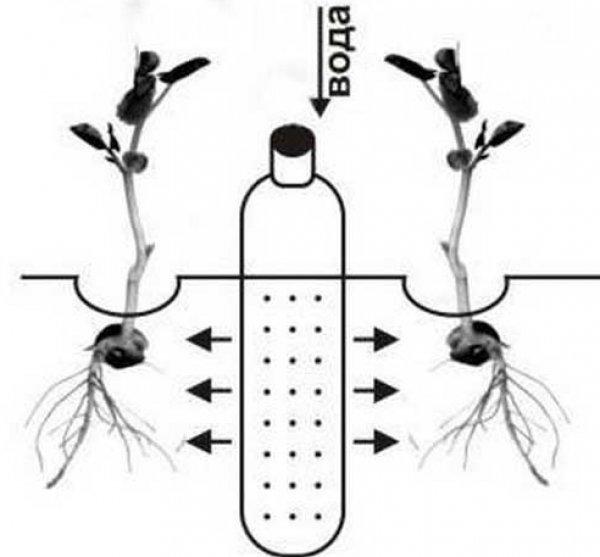 устройство системы капельного полива своими руками