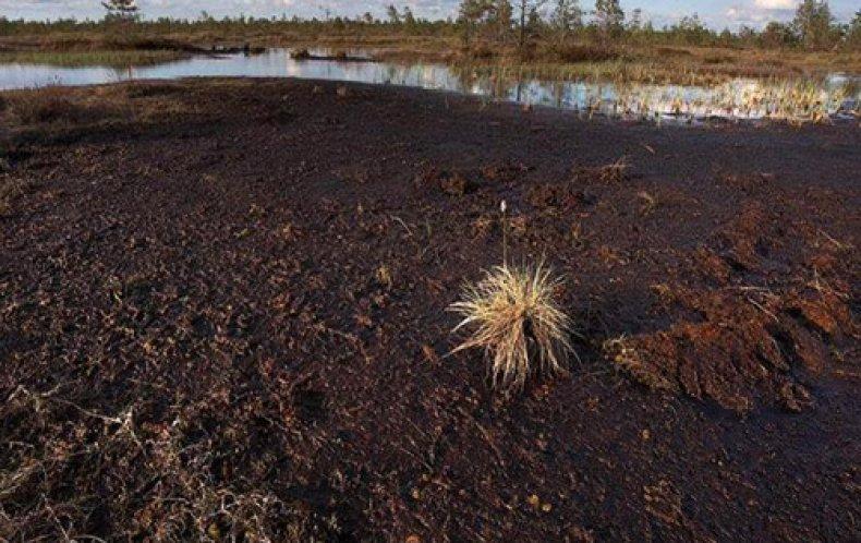 Торфяно-болотистая почва
