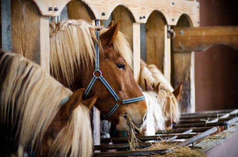 содержание, уход, лошадь, содержания лошадей, ветеринарного врача