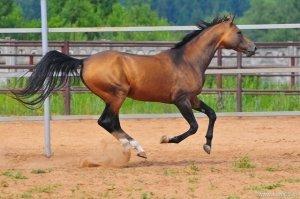 Мощь лошади не может оставаться без внимания
