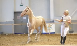 Ахалтекинская лошадь ни в коем случае не рабыня и не подданная.