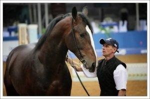 Главное достоинство данной лошади – сила.