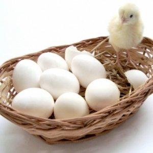 Повышение яйценоскости зимой