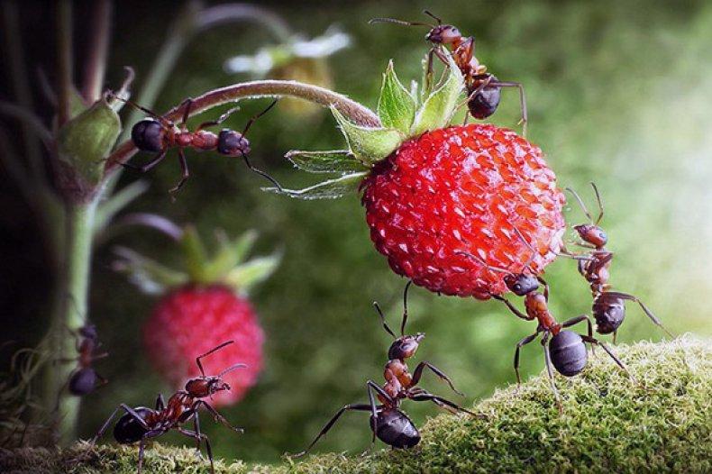 нашатырный, спирт, муравей, дача, дачном участке, освободится муравьев