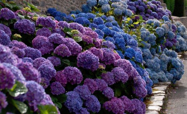 Цветущие кустарники для дачи - названия и фото растений 84