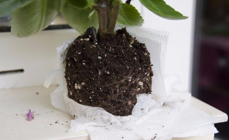 Почва для выращивания
