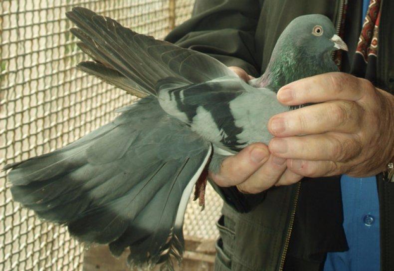 фоспренил, инструкция, животное, птица, Курс лечения