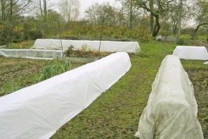 уход, садовый, гибискусом, вида гибискуса, Высаживают почву