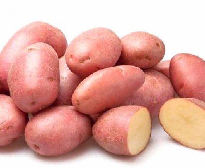 сорт картофеля розара описание фото отзывы сектор был