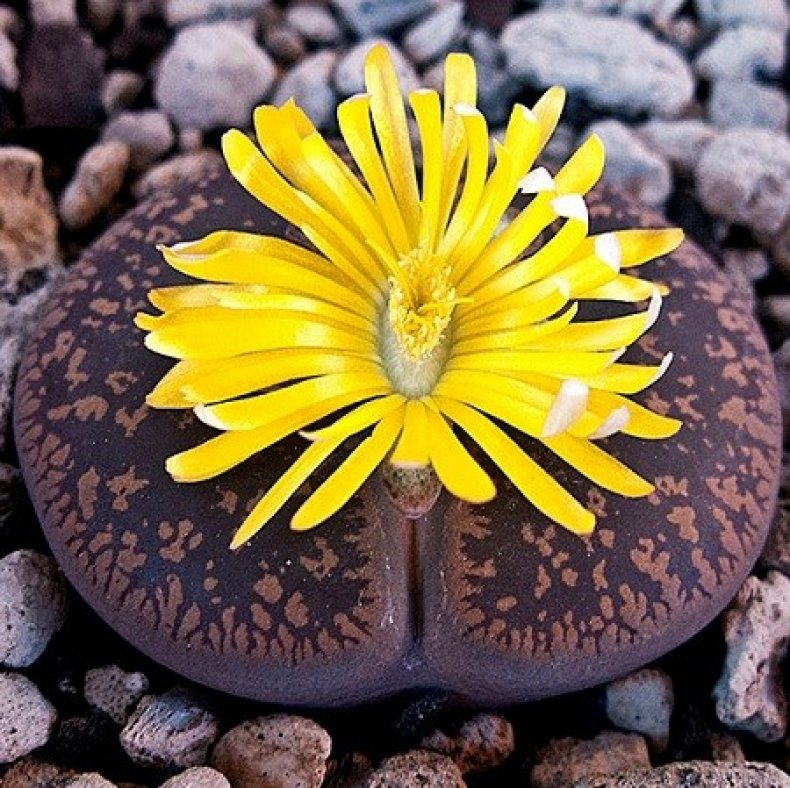 Цветы камни цена