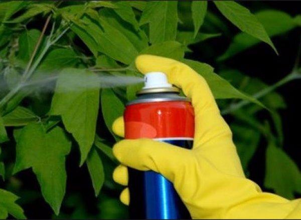 Препараты от грибков у растений