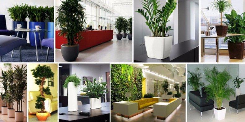 Офисы с растениями