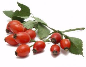 крупноплодный, сорт, шиповник, Витаминный ВНИВИ, отличается средним