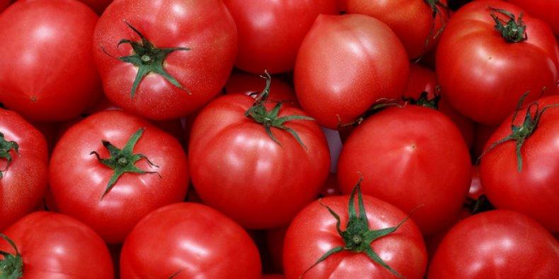 томат сорта Мишка косолапый