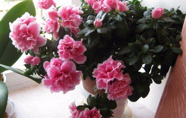 состав удобрение для комнатных растений отзывы