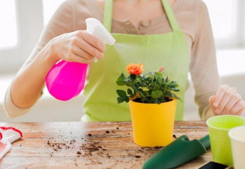 Удобрение комнатных растений