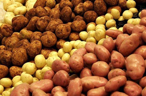 Славянский хлеб лучшие сорта картофеля