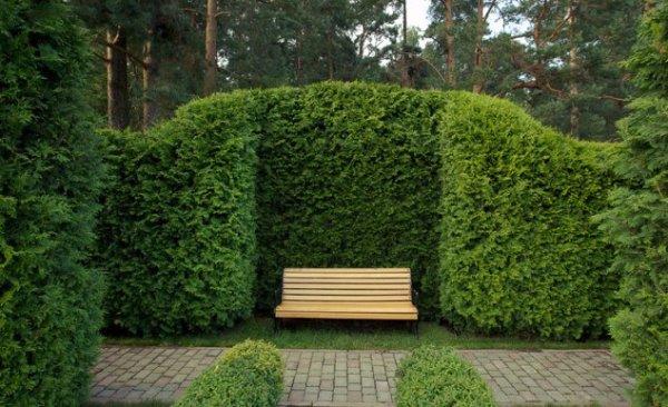 Выбираем колючий кустарник для создания живой изгороди