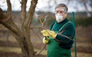 Нужно опрыскивать дерево, чтобы защитить его