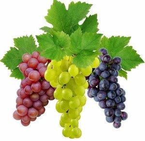 фунгициды, виноград, лечить, болезнь