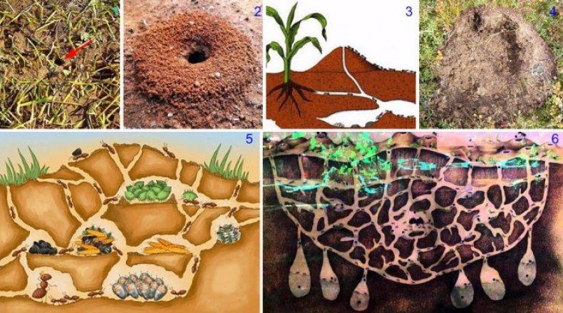 Развитие муравейника
