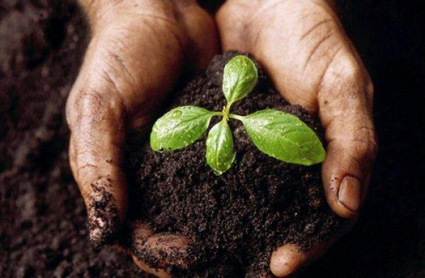Органические удобрения виды ценность и правильное применение