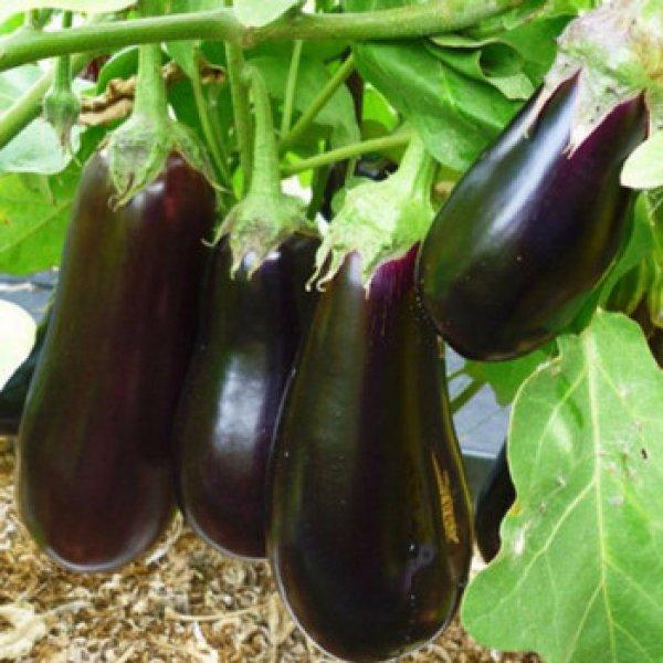 Семена и посев. Что нужно учесть при выращивании рассады