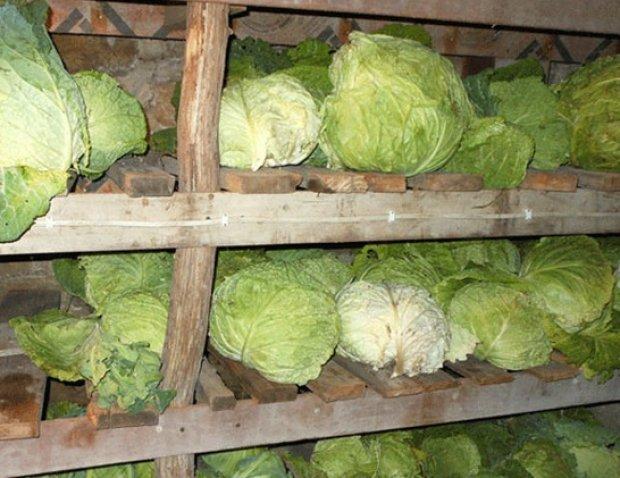 Как хранить капусту в домашних условиях в квартире