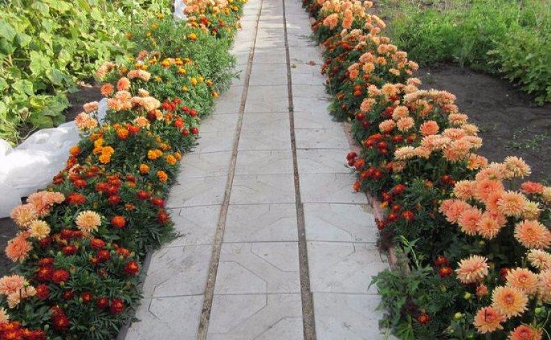 Бордюрные цветы многолетние для клумбы особенности выбора (описание и фото цветов)