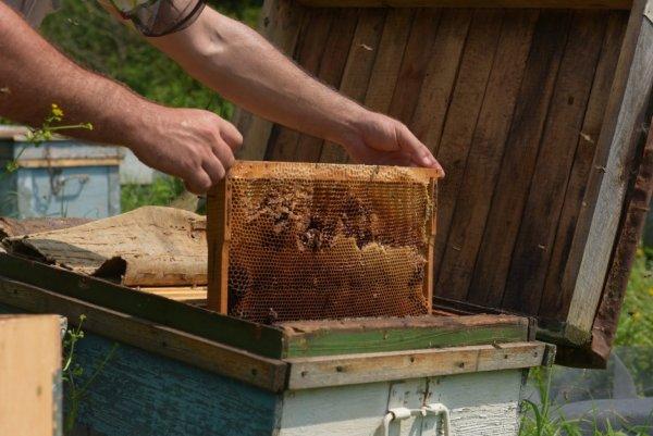 что такое лежак в пчеловодстве
