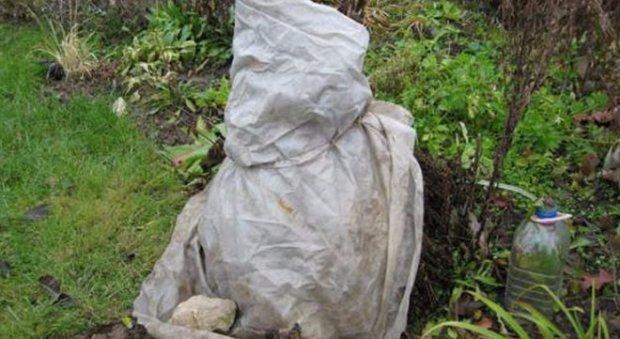 Ялівець віргінський фото